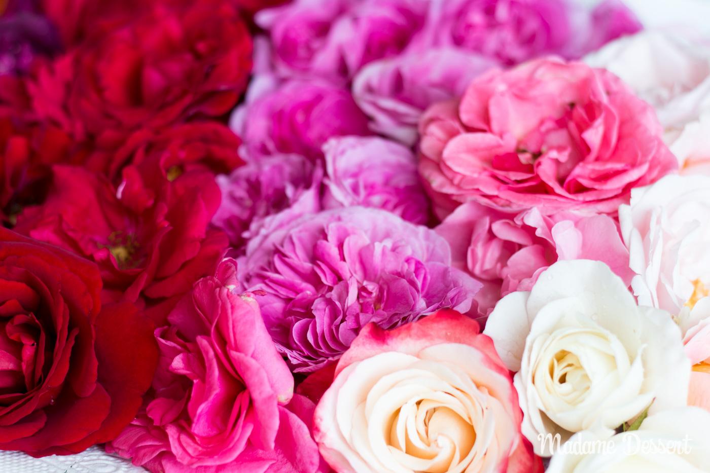 Rosensorten | Madame Dessert