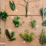 Kräuter Quiz – Erkennst du, was in meinem Garten wächst?
