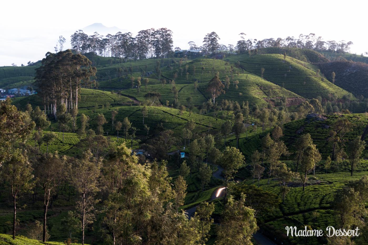 Schwarzer Ceylon Tee aus Sri Lanka | Ceylon Tea | Madame Dessert