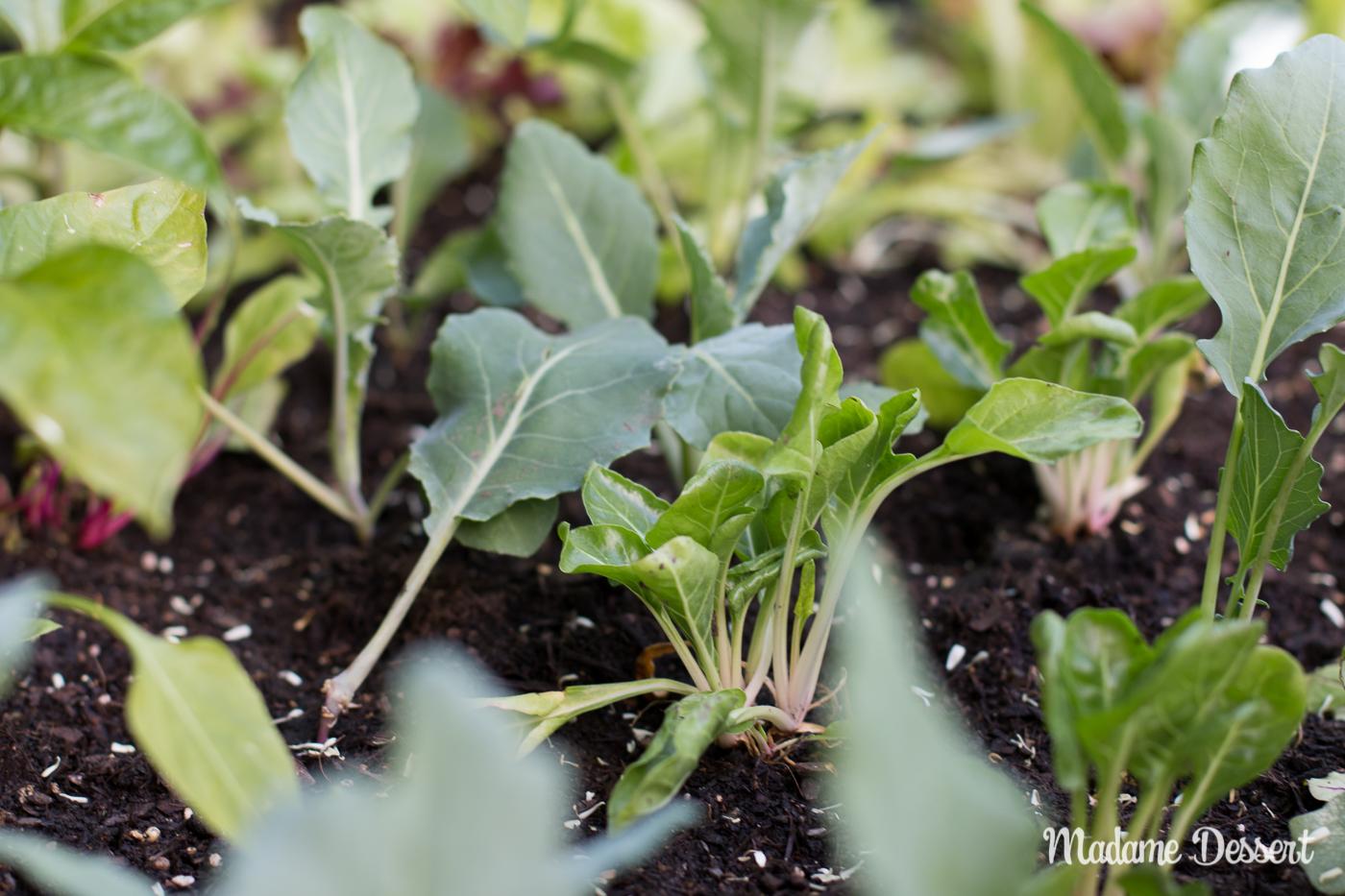 Gemüsegarten 2.0 – Bauanleitung für dein eigenes Hochbeet | Madame Dessert